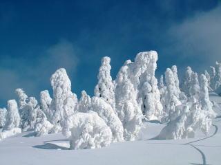 「阿仁スキー場のスノーモンスター」の画像検索結果